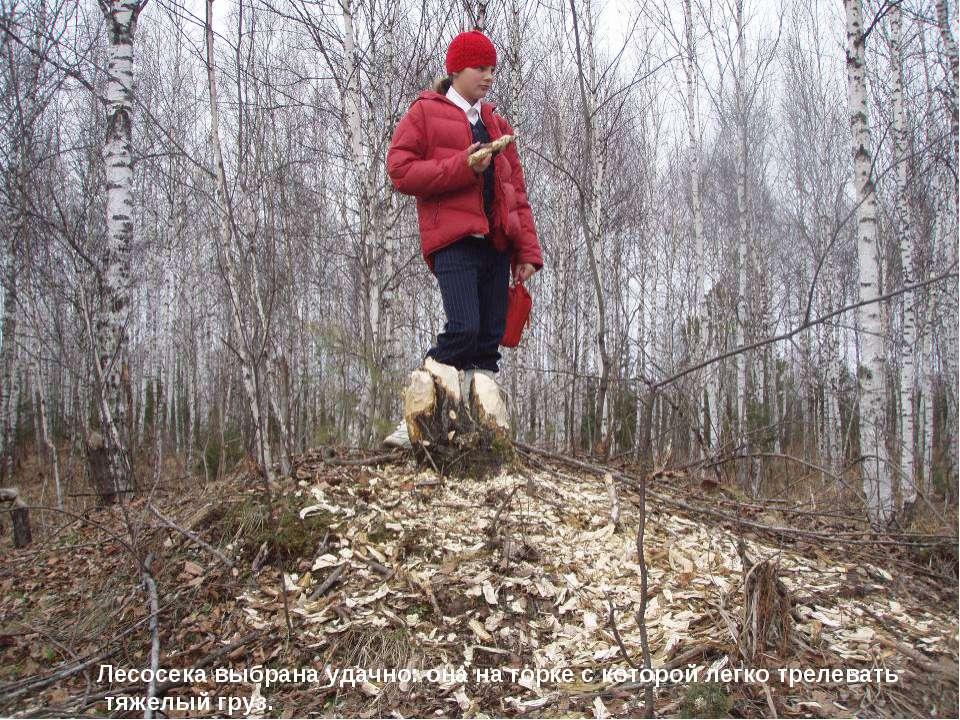 Лесосека выбрана удачно: она на горке с которой легко трелевать тяжелый груз.