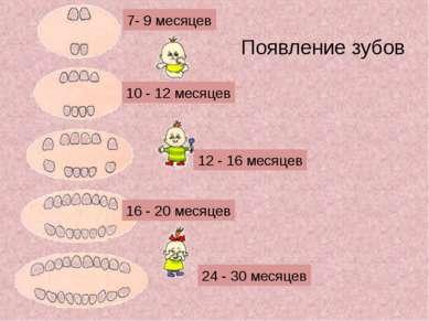 Появление зубов 7- 9 месяцев 10 - 12 месяцев 12 - 16 месяцев 16 - 20 месяцев ...