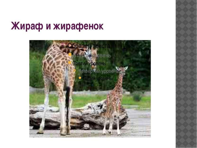 Жираф и жирафенок