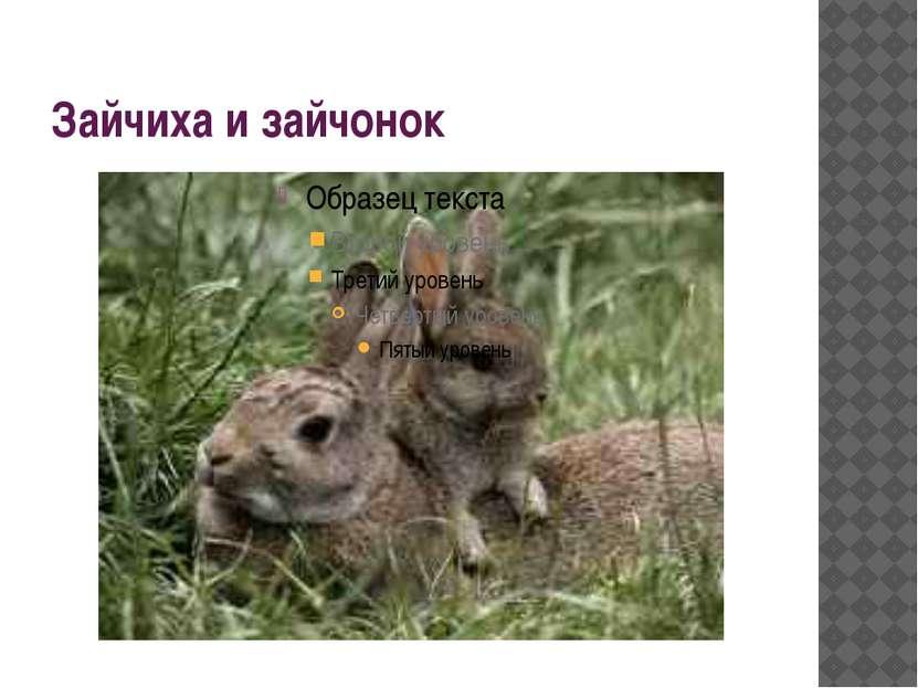 Зайчиха и зайчонок
