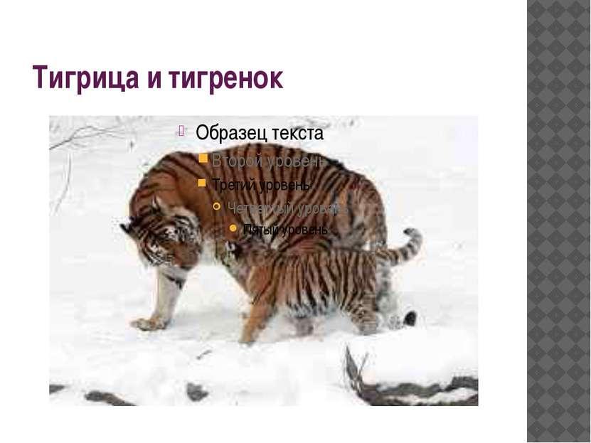 Тигрица и тигренок