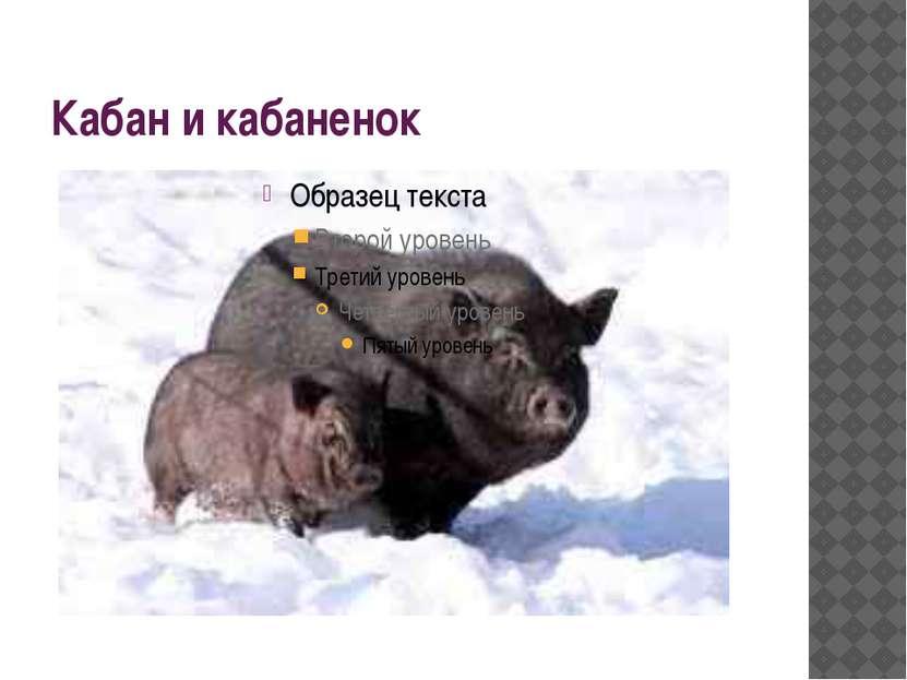 Кабан и кабаненок