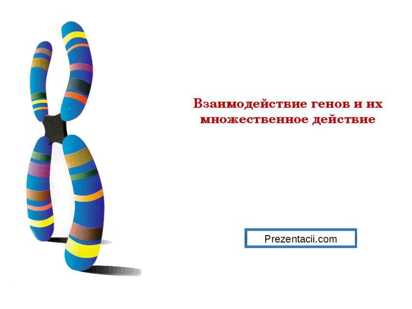 Взаимодействие генов и их множественное действие Prezentacii.com