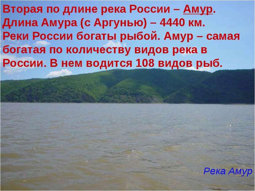 Вторая по длине река России – Амур. Длина Амура (с Аргунью) – 4440 км. Реки Р...