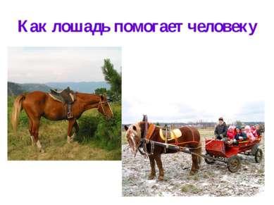 Как лошадь помогает человеку
