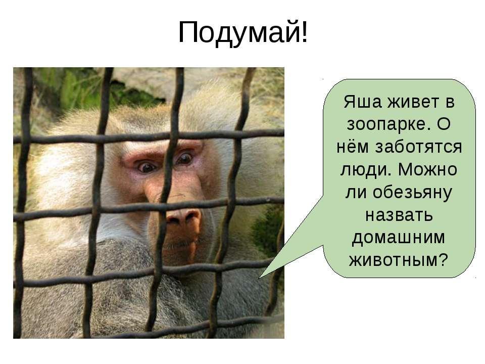 Подумай! Яша живет в зоопарке. О нём заботятся люди. Можно ли обезьяну назват...