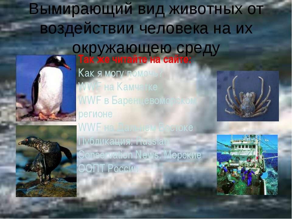 Вымирающий вид животных от воздействии человека на их окружающею среду Так же...