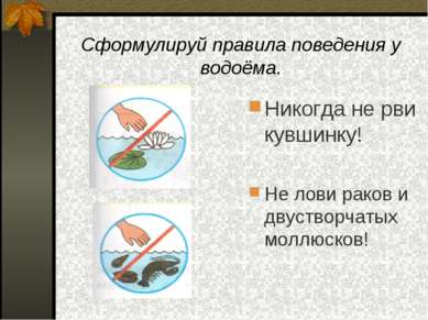 Сформулируй правила поведения у водоёма. Никогда не рви кувшинку! Не лови рак...