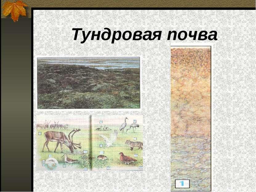 Тундровая почва