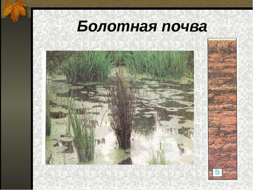 Болотная почва