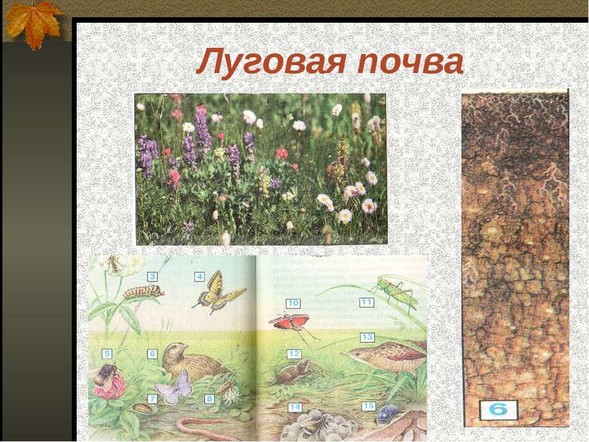 Луговая почва