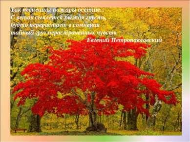 Так неспешны пожары осенние... С веток сыплется рыжая грусть, будто перераста...