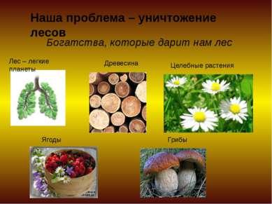 Наша проблема – уничтожение лесов Богатства, которые дарит нам лес Лес – легк...