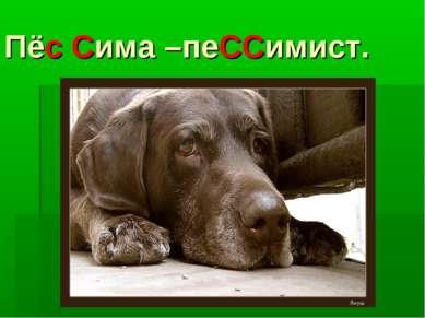 Пёс Сима –пеССимист.