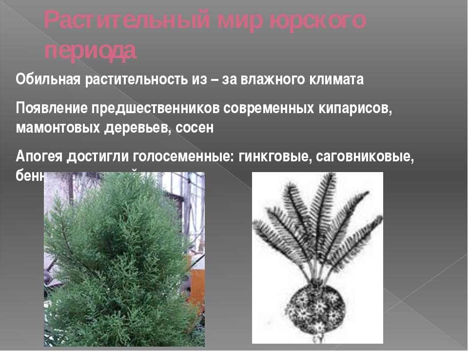Растительный мир юрского периода Обильная растительность из – за влажного кли...