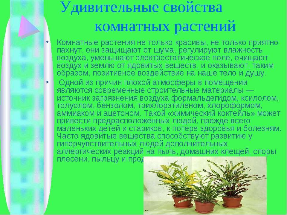 Удивительные свойства комнатных растений Комнатные растения не только красивы...