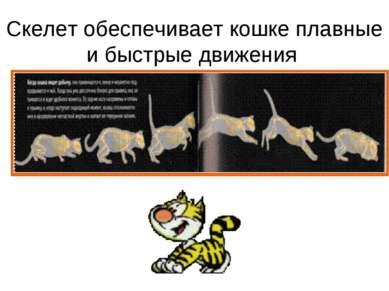 Скелет обеспечивает кошке плавные и быстрые движения