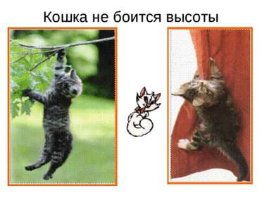 Кошка не боится высоты