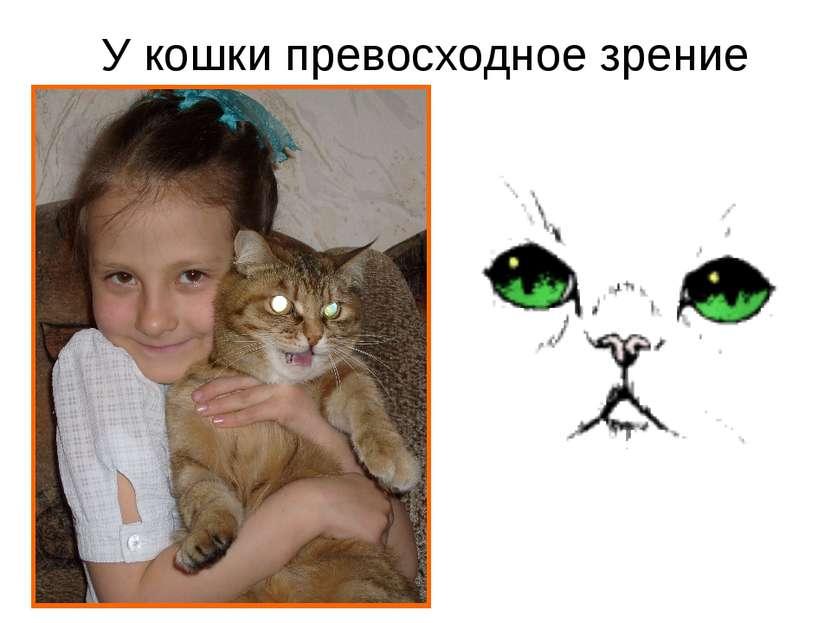 У кошки превосходное зрение