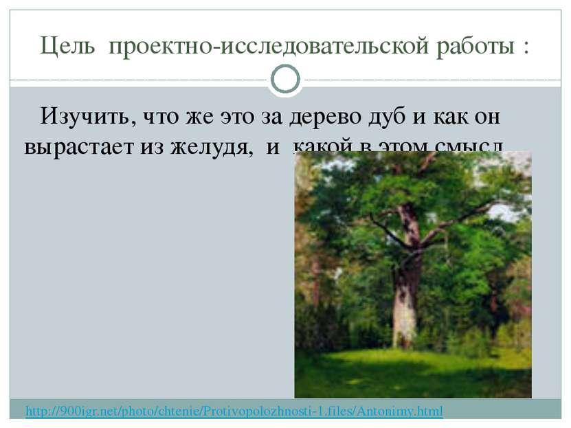 Цель проектно-исследовательской работы : Изучить, что же это за дерево дуб и ...
