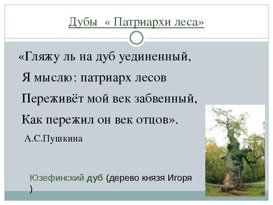 Дубы « Патриархи леса» «Гляжу ль на дуб уединенный, Я мыслю: патриарх лесов П...