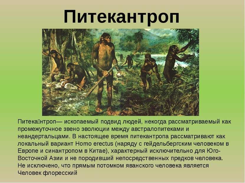 Питека нтроп— ископаемый подвид людей, некогда рассматриваемый как промежуточ...