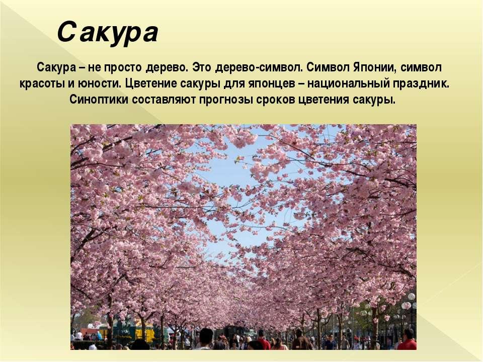 Сакура Сакура – не просто дерево. Это дерево-символ. Символ Японии, символ кр...