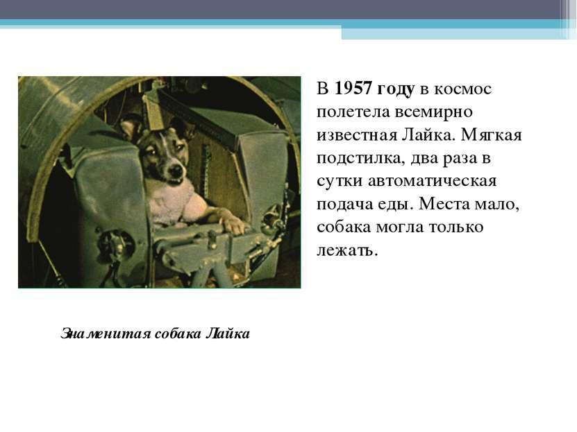 В 1957 году в космос полетела всемирно известная Лайка. Мягкая подстилка, два...