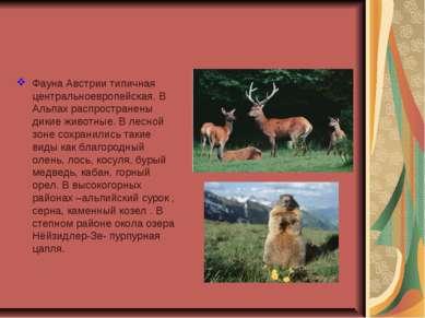 Фауна Австрии типичная центральноевропейская. В Альпах распространены дикие ж...