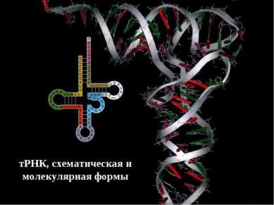 тРНК, схематическая и молекулярная формы