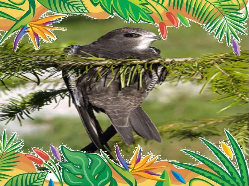 Самая летающая птица- чёрный стриж длина тела 18-21 см, размах крыльев 38-42...