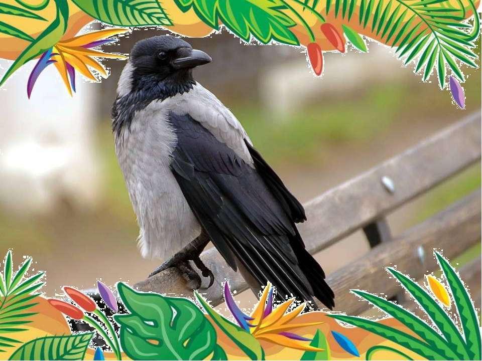 Самая умная птица- ворона. Вороны — прекрасные подражатели: они могут повтор...