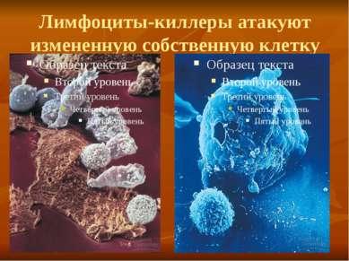 Лимфоциты-киллеры атакуют измененную собственную клетку