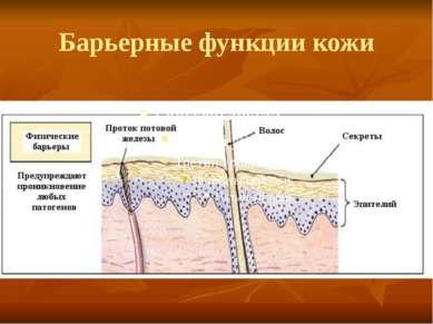 Барьерные функции кожи