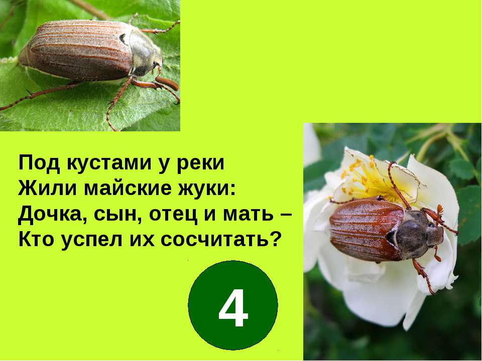 Под кустами у реки Жили майские жуки: Дочка, сын, отец и мать – Кто успел их ...