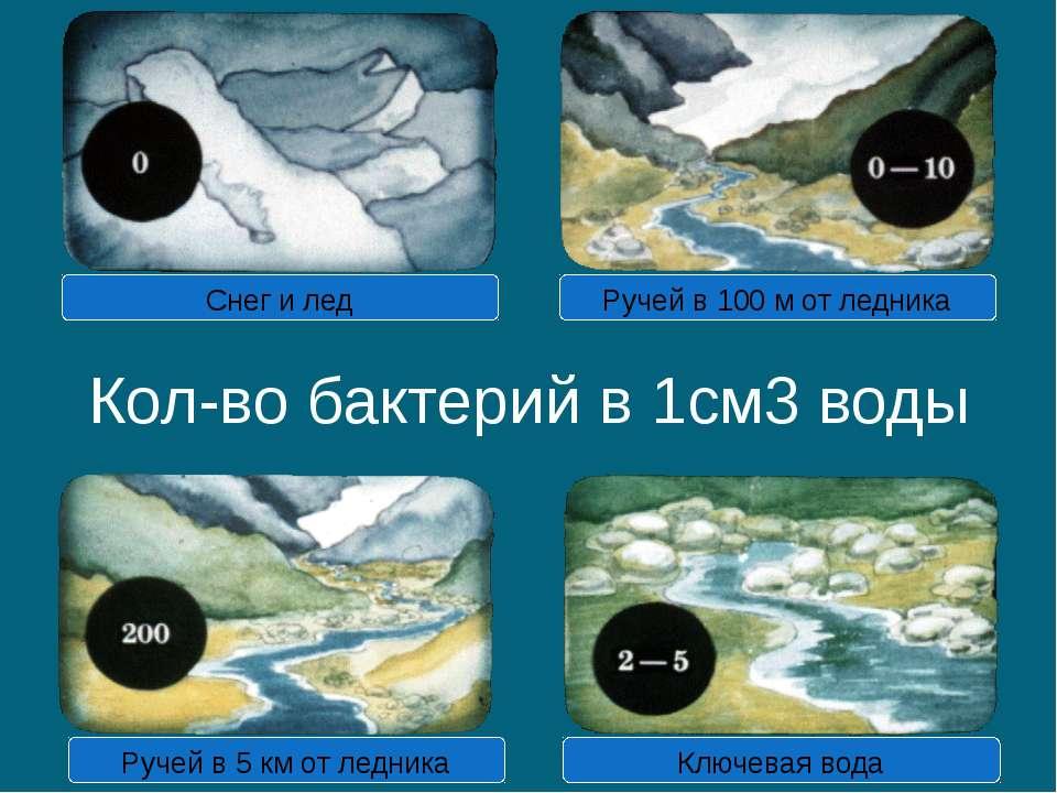 Кол-во бактерий в 1см3 воды Снег и лед Ручей в 100 м от ледника Ручей в 5 км ...