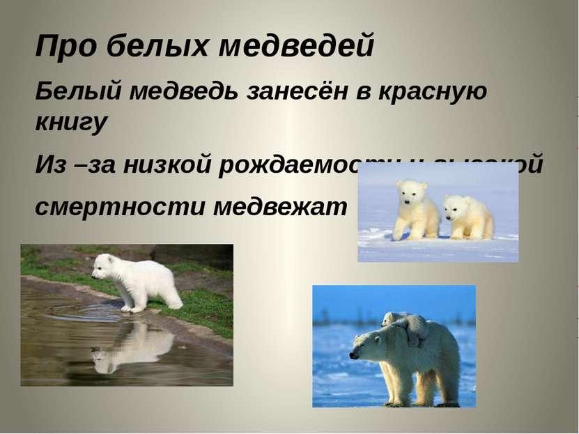 Про белых медведей Белый медведь занесён в красную книгу Из –за низкой рождае...