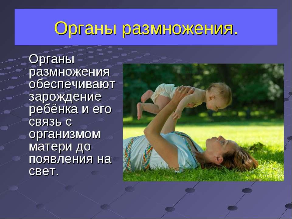 Органы размножения. Органы размножения обеспечивают зарождение ребёнка и его ...