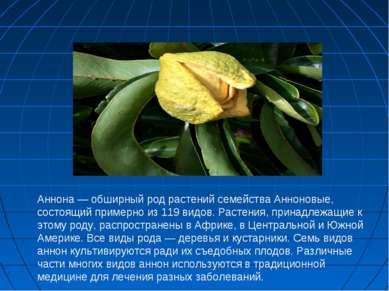 Аннона — обширный род растений семейства Анноновые, состоящий примерно из 119...