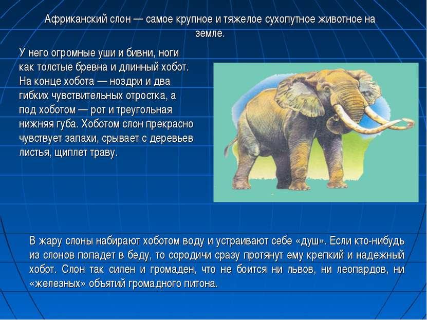 В жару слоны набирают хоботом воду и устраивают себе «душ». Если кто-нибудь и...