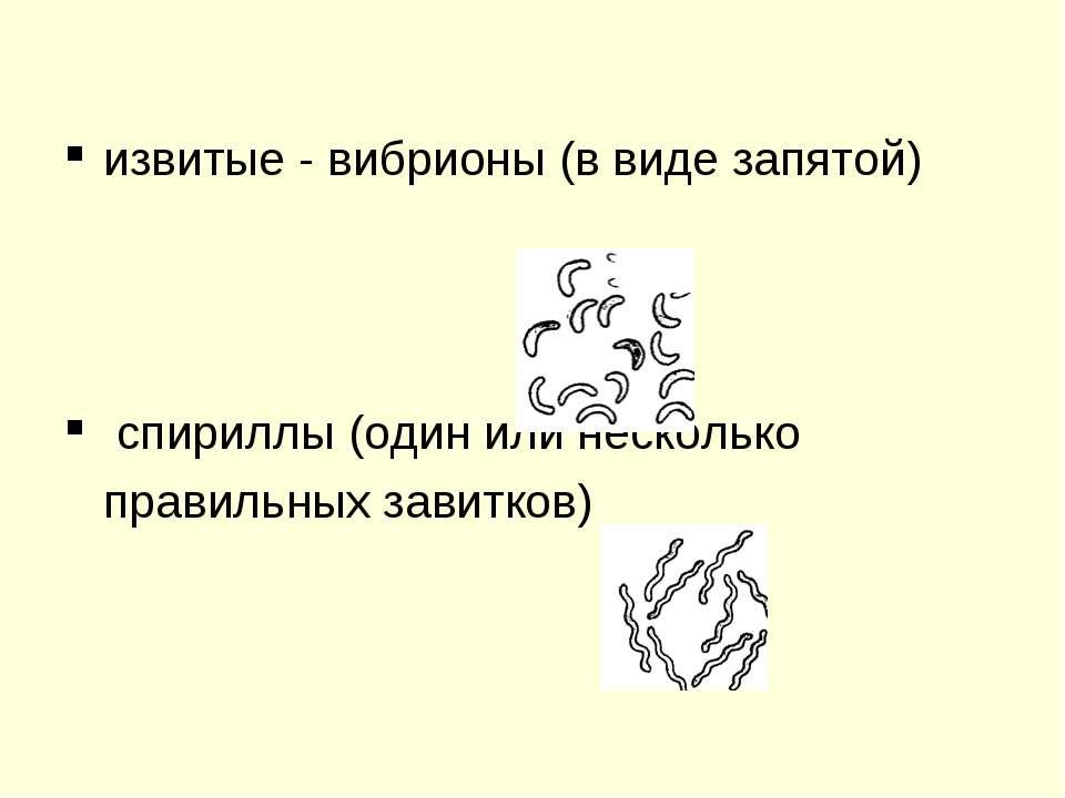 извитые - вибрионы (в виде запятой) спириллы (один или несколько правильных з...