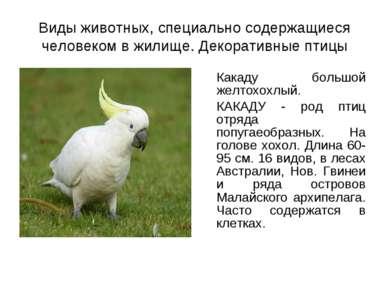 Виды животных, специально содержащиеся человеком в жилище. Декоративные птицы...