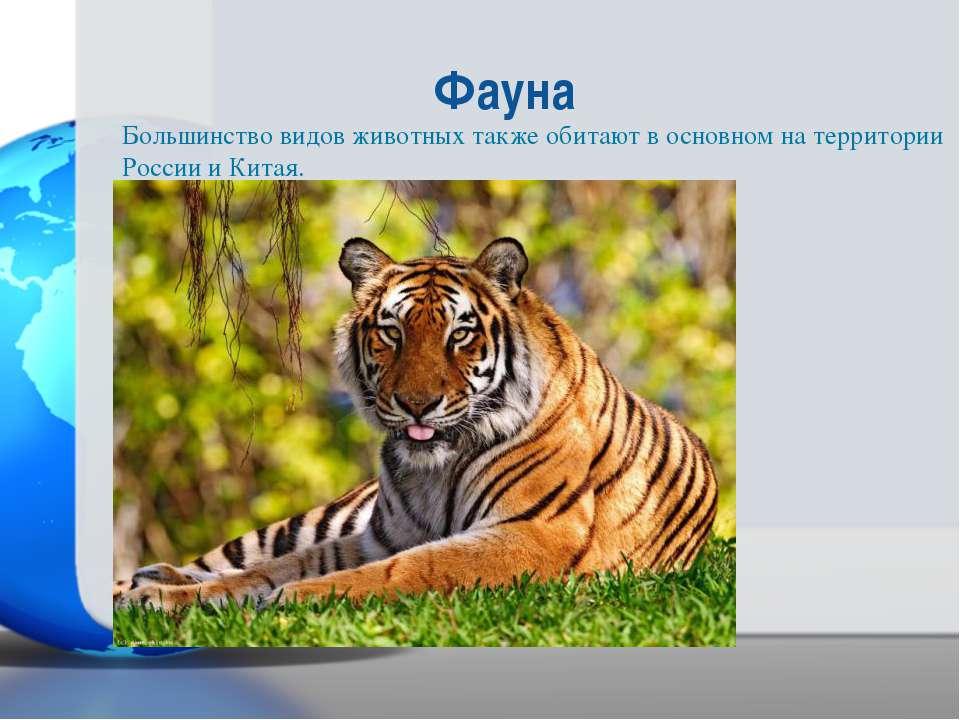 Большинство видов животных также обитают в основном на территории России и Ки...