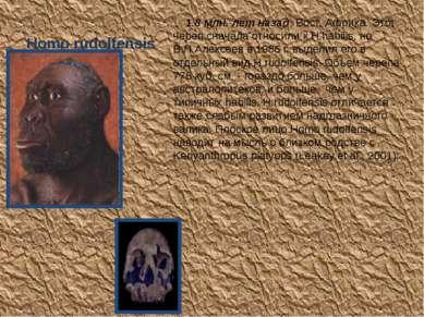 Homo rudolfensis 1.8 млн. лет назад, Вост. Африка. Этот череп сначала относил...