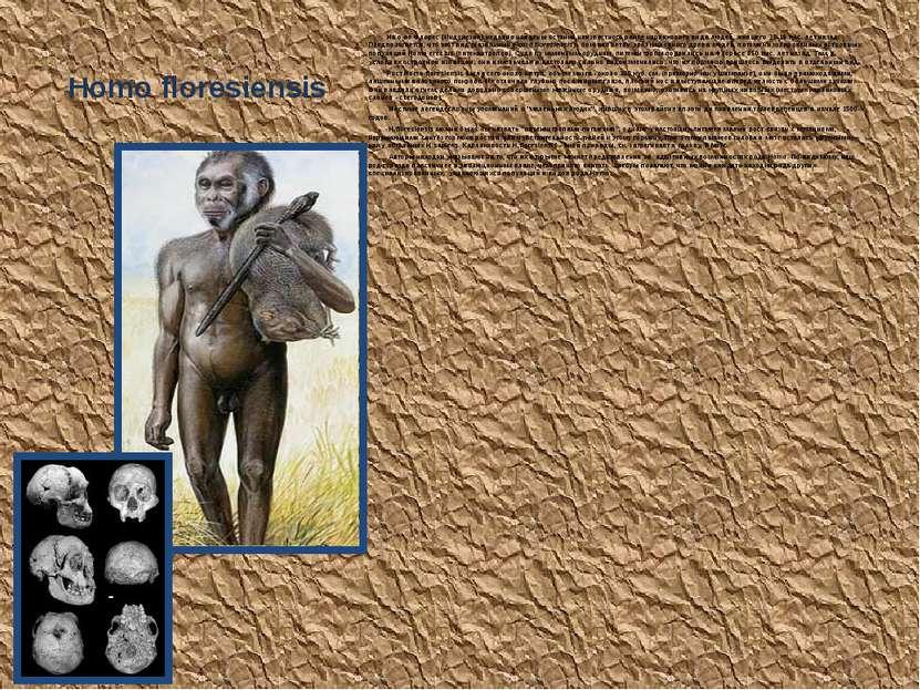 Homo floresiensis На о-ве Флорес (Индонезия) недавно найдены останки неизвест...