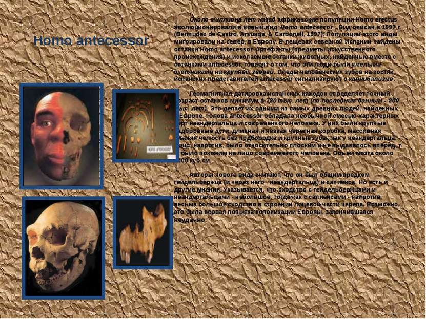 Homo antecessor Около миллиона лет назад африканские популяции Homo erectus э...