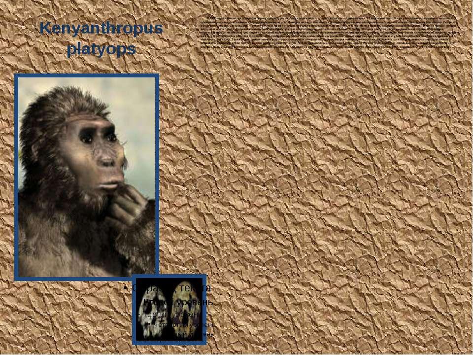 Kenyanthropus platyops В 1999 году в Кении, на западном берегу озера Туркана,...