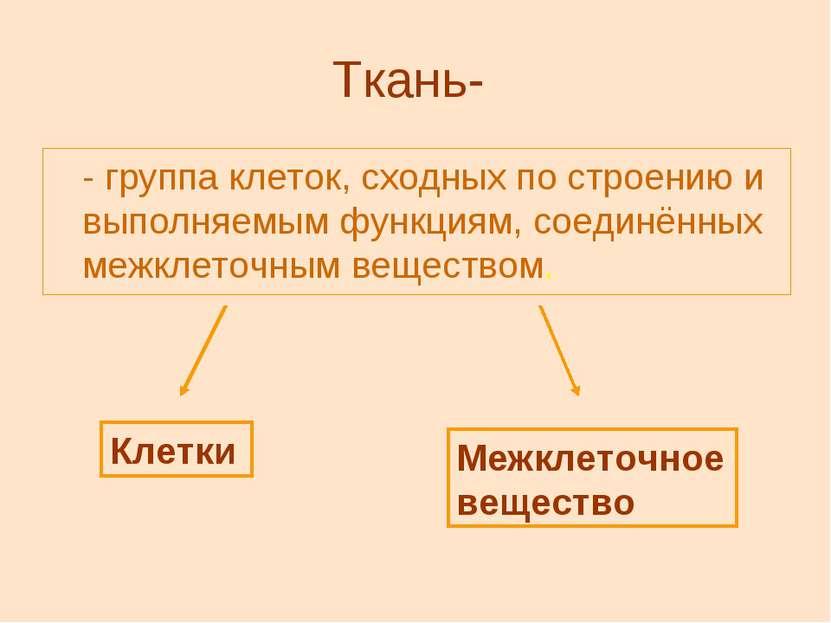 Ткань- - группа клеток, сходных по строению и выполняемым функциям, соединённ...
