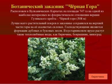 """Ботанический заказник """"Чёрная Гора"""" Расположен в Вулканических Карпатах на пл..."""