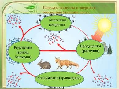 Передача вещества и энергии в экосистеме (пищевая цепь). Биогенное вещество Р...